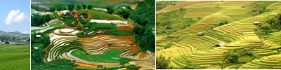 Introduction to the Ancient, Ethnic and Craft Villages in Vietnam